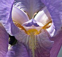 Inside the Iris by Kathy Yates