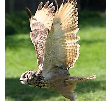 Flying Bengal Eagle Owl Photographic Print
