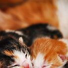 Sleeping Siblings by lisabella