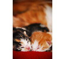 Sleeping Siblings Photographic Print
