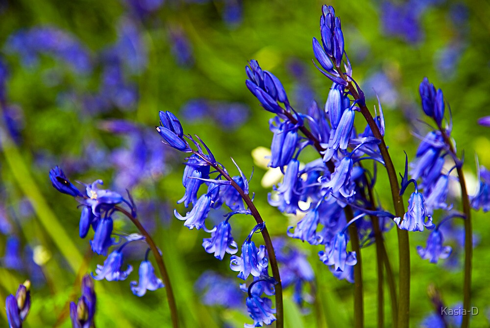 Bluebell Dance by Kasia-D