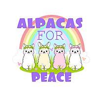 Alpacas For Peace  Photographic Print