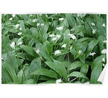 Mmmm The Smell of The Wild Garlic! Poster