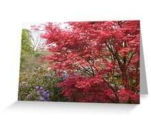 Glorious Acer Tree Greeting Card