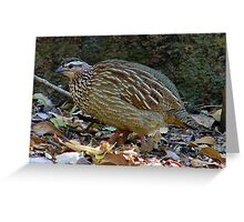 Quail, not common! Greeting Card