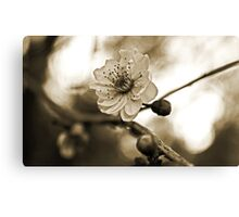 Cherry Blossoms in Sepia #2 Canvas Print