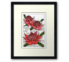 Australian Flower Series - Waratah Colour Framed Print