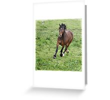 Run Beau Run Greeting Card