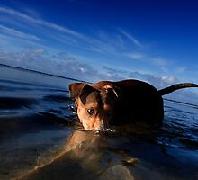 Paws playing Jaws by Alex Preiss