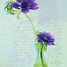 Blue anemones by IngeHG
