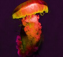 Jellyfish4 by Bronia Swayer