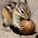 It's My Ball! by Betsy  Seeton