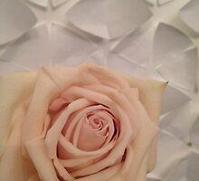 Pink Rose by AHigginsPhoto