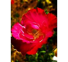 Red Poppy Fractalius Photographic Print