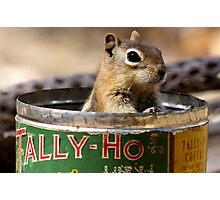 Tally Ho #2 Photographic Print
