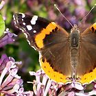 Butterfly Eyes by ArtBee