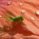 Dew drop hop by paintin4him