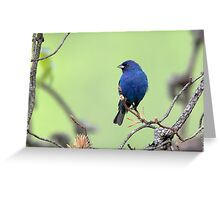 Indigo Habitat Greeting Card