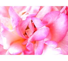 All About Pink Photographic Print