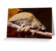 Eucalyptus Weevil Greeting Card