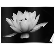 Water Lily Sideview (Black and White)  Poster
