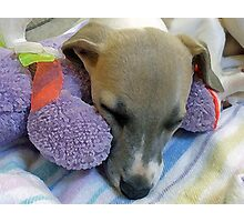 A Dog's Life - Whippet Pup Taking a Cat-nap (Filter Version) Photographic Print