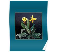 """Trout Lily""   Poster"