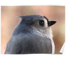 Tufted Titmouse Profile Portrait ... Slick Back Hair Poster