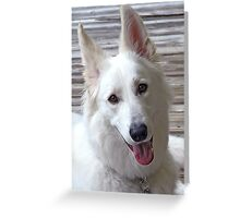 Smiling White German Shepherd Dog  Greeting Card