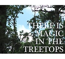 Magic Treetops (Sky and Brambles) Photographic Print