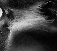 Lost Thoughts - Philidelphia Zoo by mvenini11