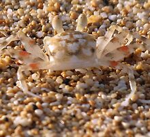 Sand crab  by HanieBCreations
