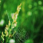 WEBS IN FIELDS by Terra 'Sunshine' Gilbert