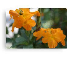 Orange Blooms Canvas Print