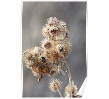 Spiny Burrs Poster
