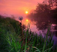 Dandelion Sunrise by David Mould