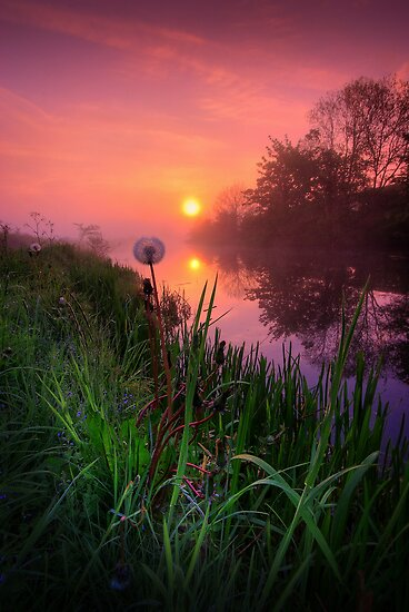 Dandelion Sunrise by David Mould