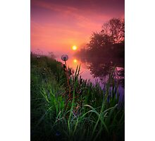 Dandelion Sunrise Photographic Print
