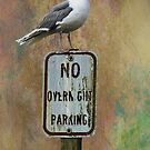Seagull Standing Guard by Diane Schuster