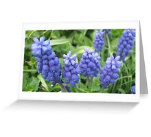 Grape Hyacinth Greeting Card