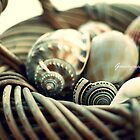 Basket of sea shells by growtograph