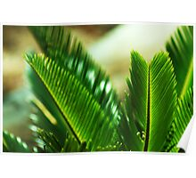 Cycad Poster