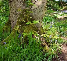 Blue Bells and grasses around the base of a tree by Gary Rayner