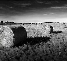 Hay by Kym Howard