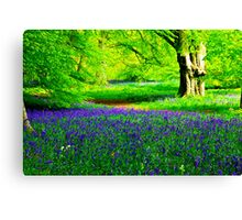 Bluebell Wood - Thorpe Perrow #2 Canvas Print