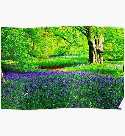 Bluebell Wood - Thorpe Perrow #2 Poster