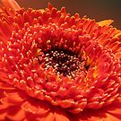 Orange Flower by Anteia