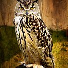 European Eagle Owl by Country  Pursuits