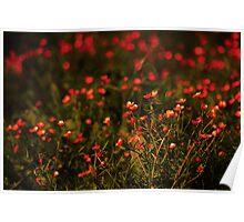 Flower Bokeh... Poster