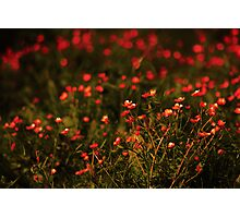 Flower Bokeh... Photographic Print